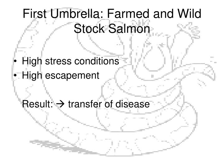 First Umbrella: Farmed and Wild Stock Salmon