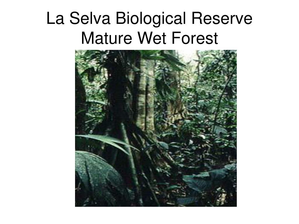 La Selva Biological Reserve Mature Wet Forest