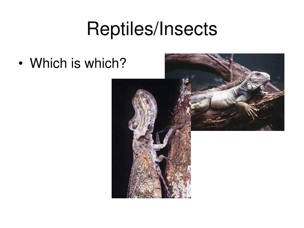 Reptiles/Insects