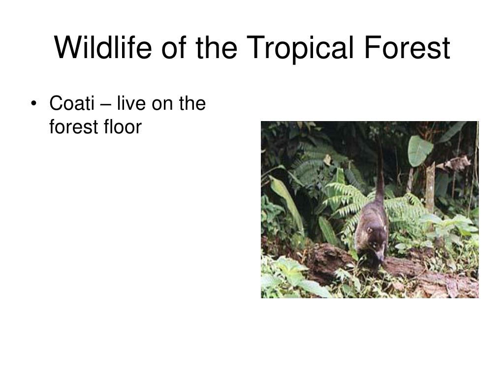 Wildlife of the Tropical Forest