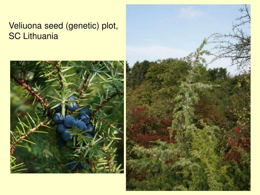 Veliuona seed (genetic) plot,