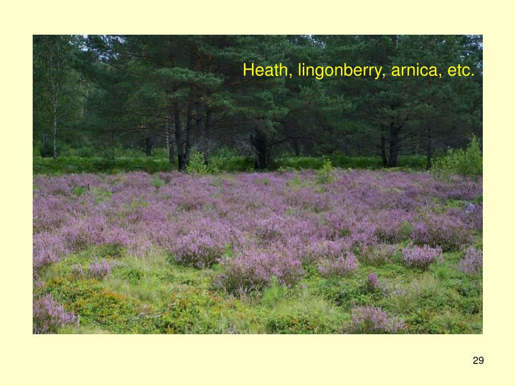 Heath, lingonberry, arnica, etc.