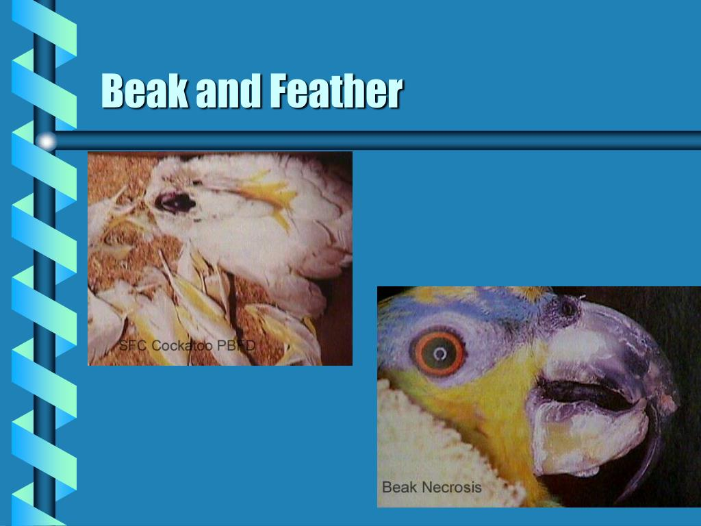 Beak and Feather