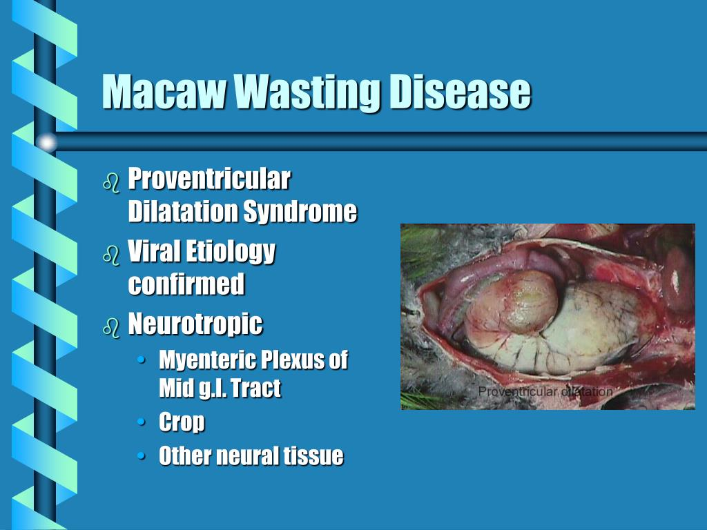 Macaw Wasting Disease