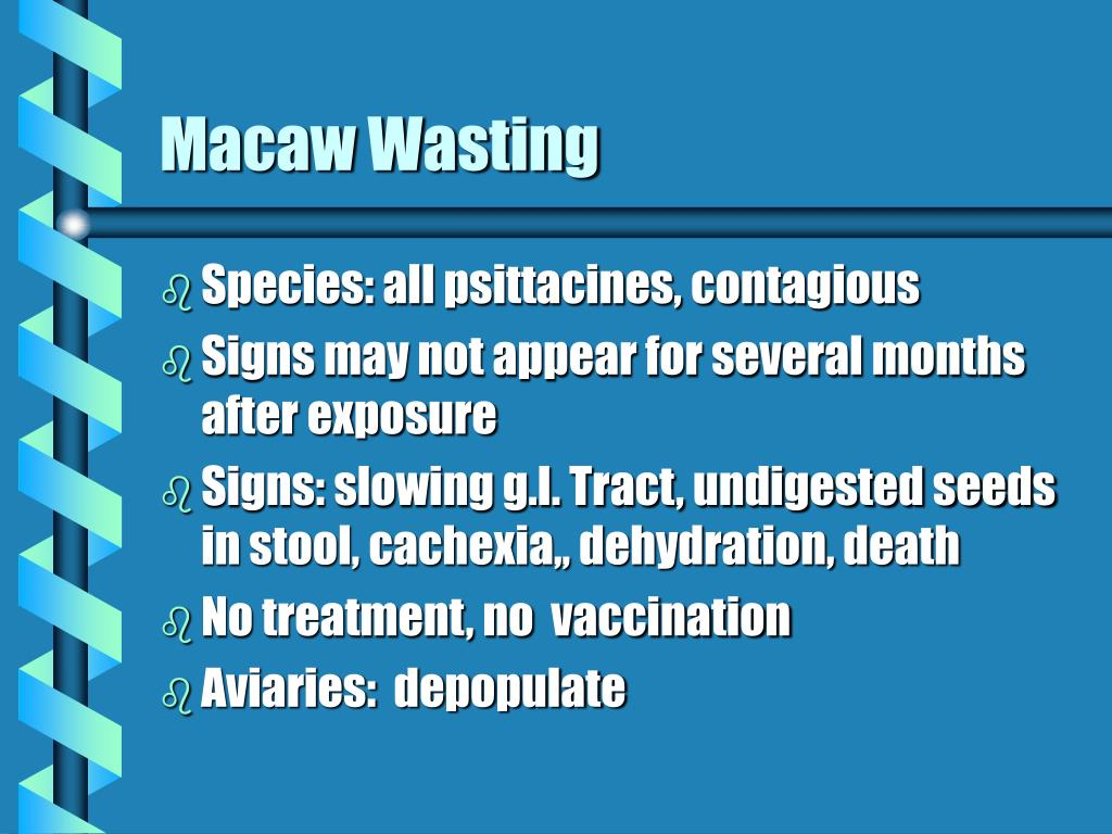 Macaw Wasting
