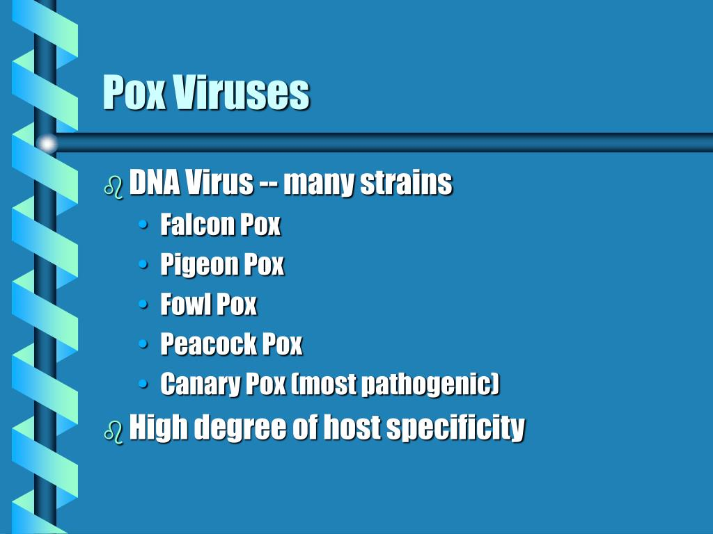 Pox Viruses