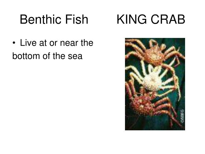 Benthic Fish        KING CRAB