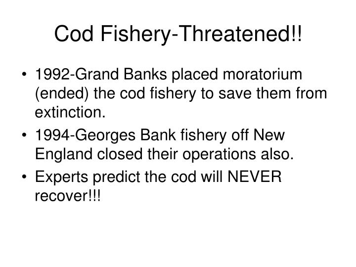 Cod Fishery-Threatened!!