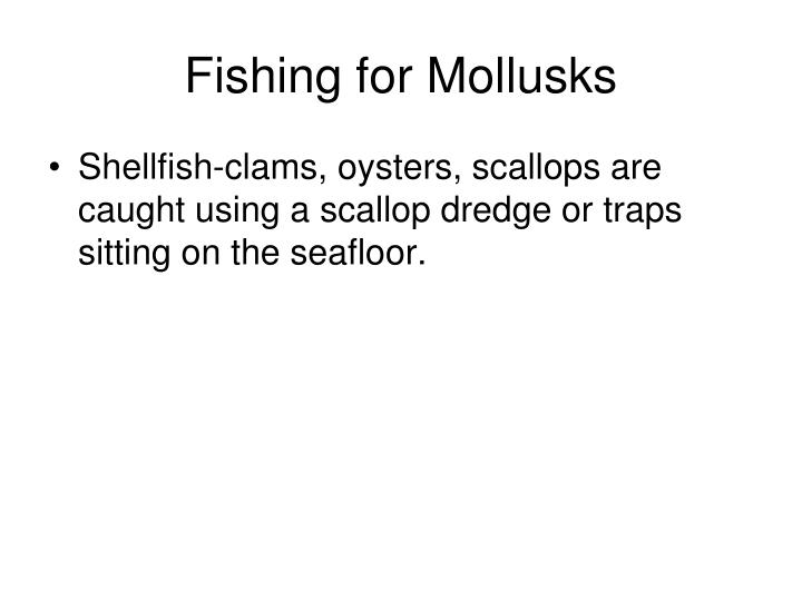 Fishing for Mollusks