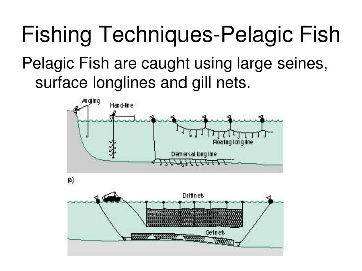Fishing Techniques-Pelagic Fish