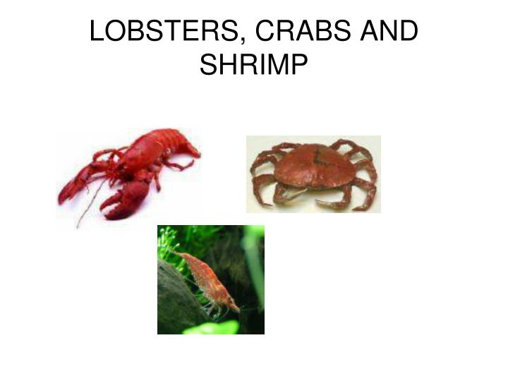 LOBSTERS, CRABS AND SHRIMP