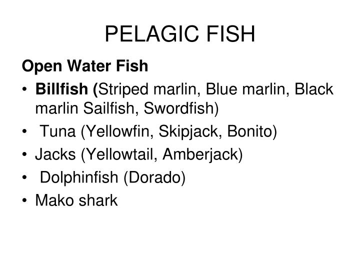 PELAGIC FISH