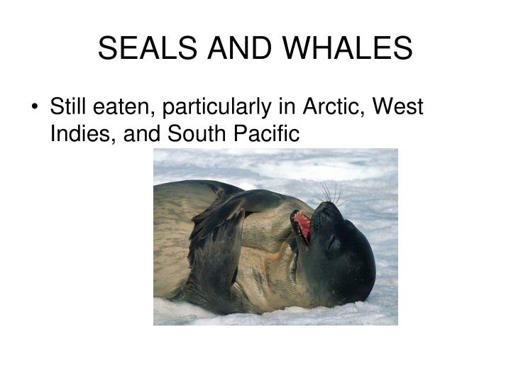 SEALS AND WHALES