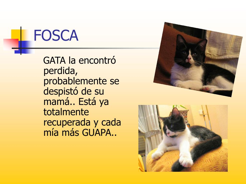 FOSCA