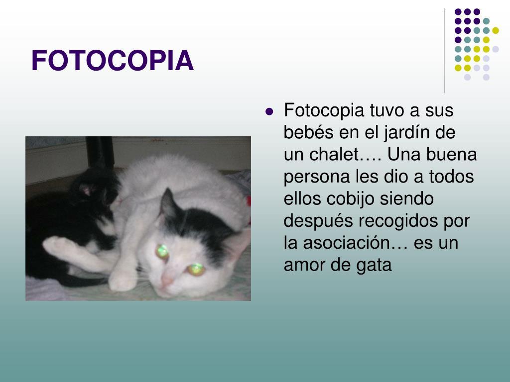 FOTOCOPIA
