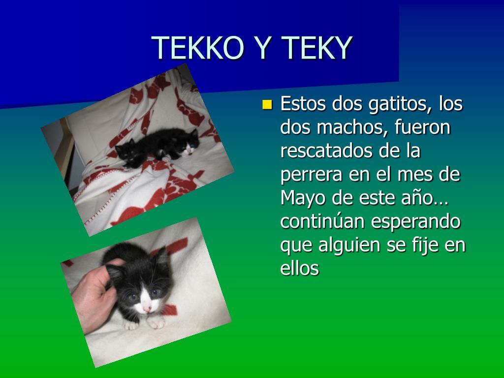 TEKKO Y TEKY