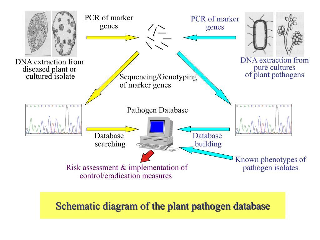 PCR of marker