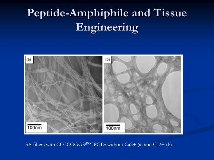 Peptide-Amphiphile and Tissue Engineering
