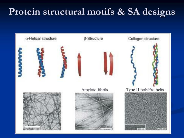 Protein structural motifs & SA designs