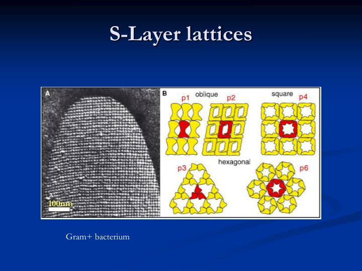S-Layer lattices
