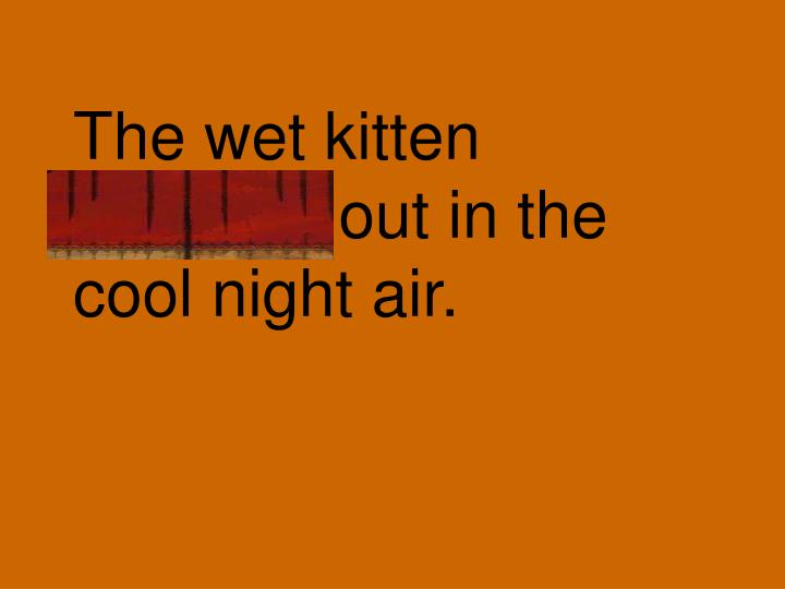 The wet kitten shivered out in the cool night air.