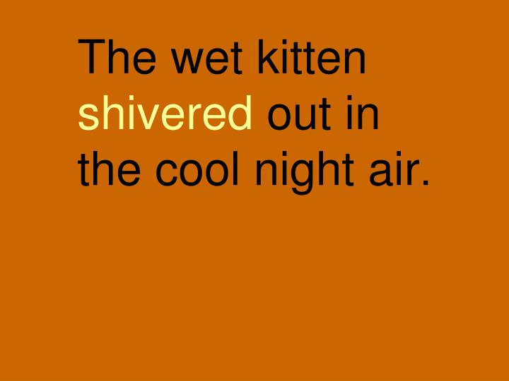 The wet kitten