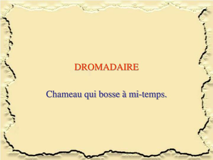 DROMADAIRE
