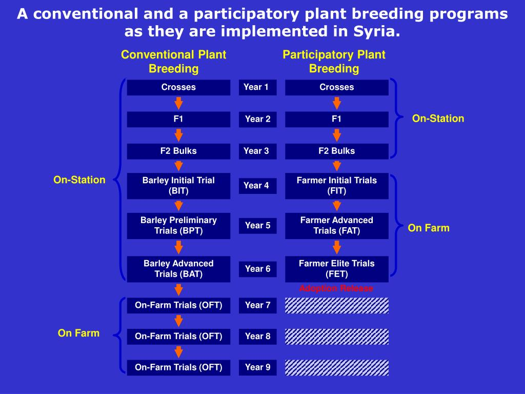 A conventional and a participatory plant breeding programs as they are implemented in Syria.