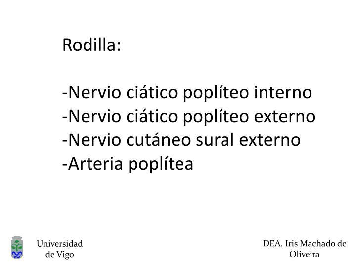 Rodilla: