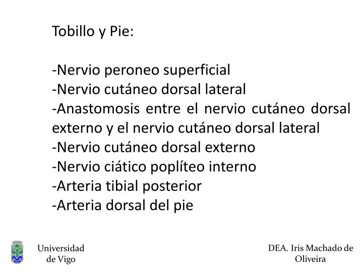 Tobillo y Pie: