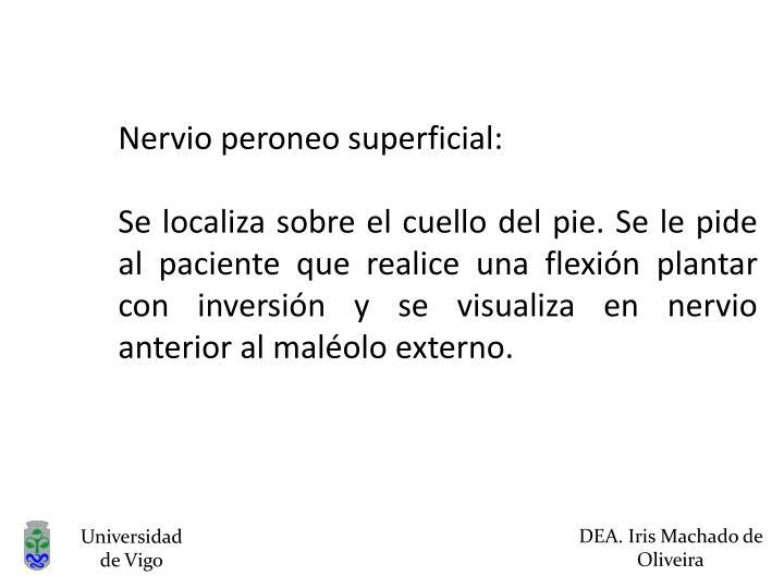 Nervio peroneo superficial: