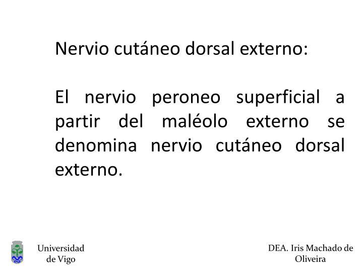 Nervio cutáneo dorsal externo: