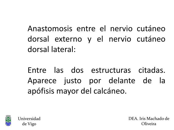 Anastomosis entre el nervio cutáneo dorsal externo y el nervio cutáneo dorsal lateral: