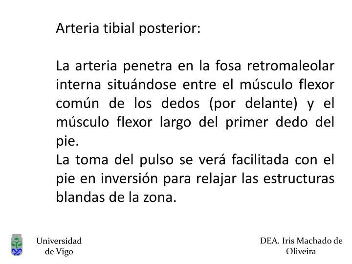Arteria tibial posterior: