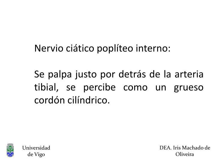 Nervio ciático poplíteo interno:
