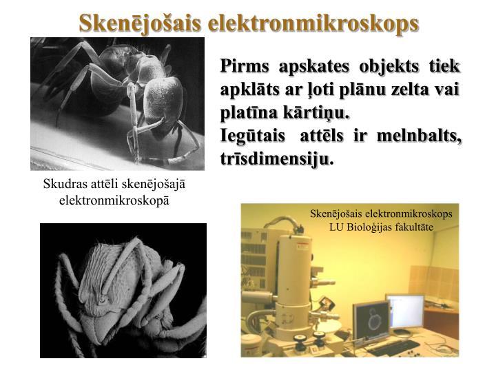 Skenējošais elektronmikroskops