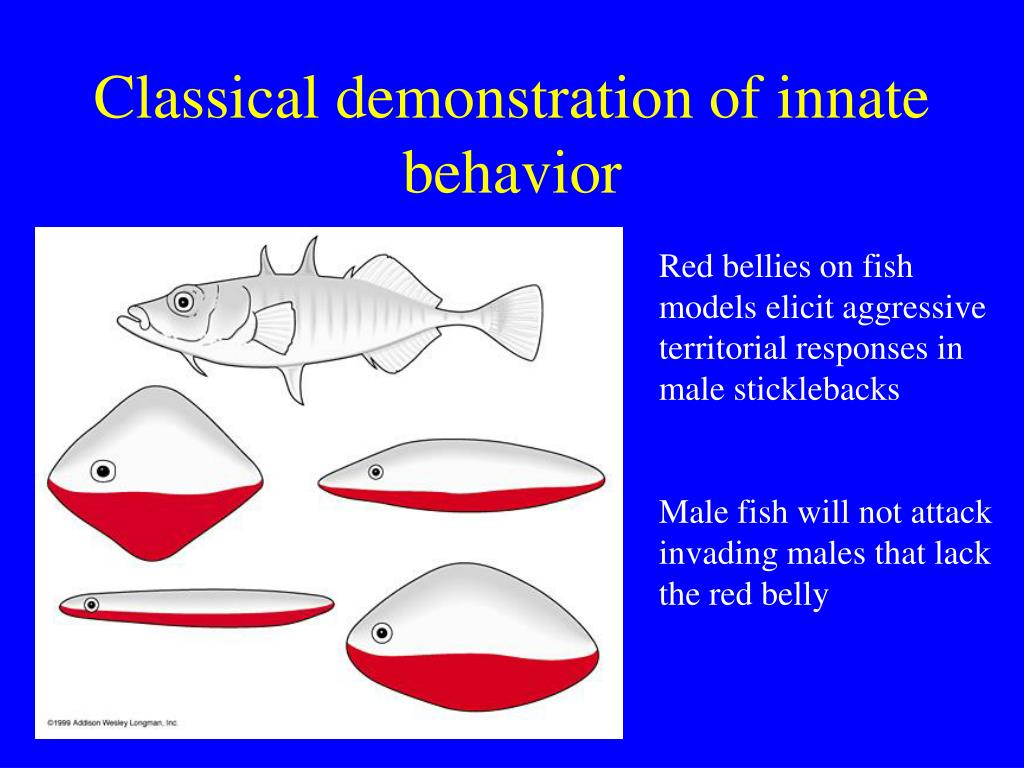 Classical demonstration of innate behavior