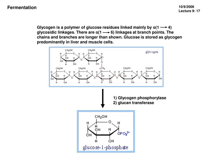 Glycogen is a polymer of glucose residues linked mainly by