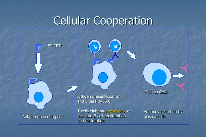 Cellular Cooperation