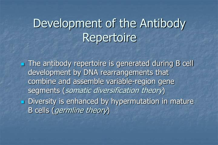 Development of the Antibody Repertoire