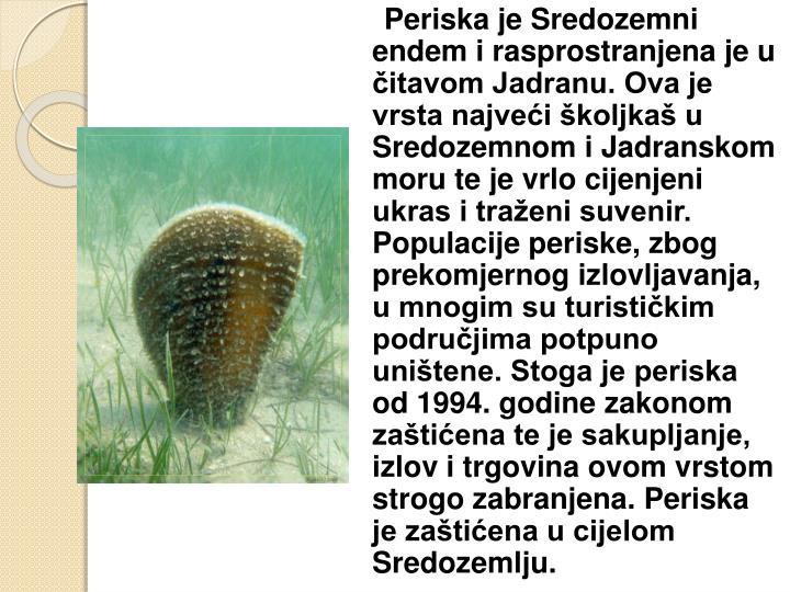 Periska je Sredozemni endem i rasprostranjena je u čitavom Jadranu. Ova je vrsta najveći školjkaš u Sredozemnom i Jadranskom moru te je vrlo cijenjeni ukras i traženi suvenir. Populacije periske, zbog prekomjernog izlovljavanja, u mnogim su turističkim područjima potpuno uništene. Stoga je periska od 1994. godine zakonom zaštićena te je sakupljanje, izlov i trgovina ovom vrstom strogo zabranjena. Periska je zaštićena u cijelom Sredozemlju.