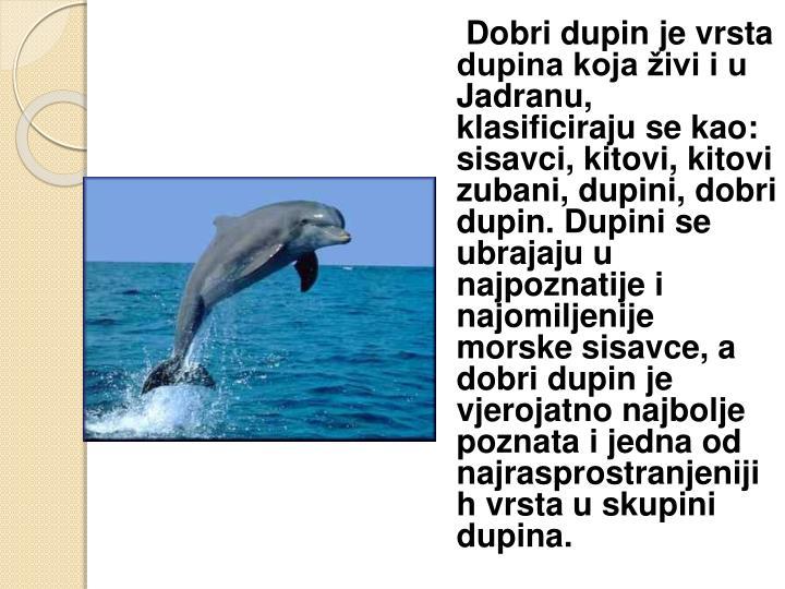 Dobri dupin je vrsta dupina koja živi i u Jadranu, klasificiraju se kao: sisavci, kitovi, kitovi zubani, dupini, dobri dupin. Dupini se ubrajaju u najpoznatije i najomiljenije morske sisavce, a dobri dupin je vjerojatno najbolje poznata i jedna od najrasprostranjenijih vrsta u skupini dupina.