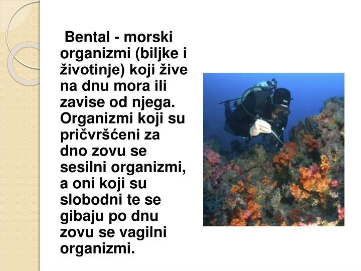 Bental - morski organizmi (biljke i životinje) koji žive na dnu mora ili zavise od njega. Organizmi koji su pričvršćeni za dno zovu se sesilni organizmi, a oni koji su slobodni te se gibaju po dnu zovu se vagilni organizmi.
