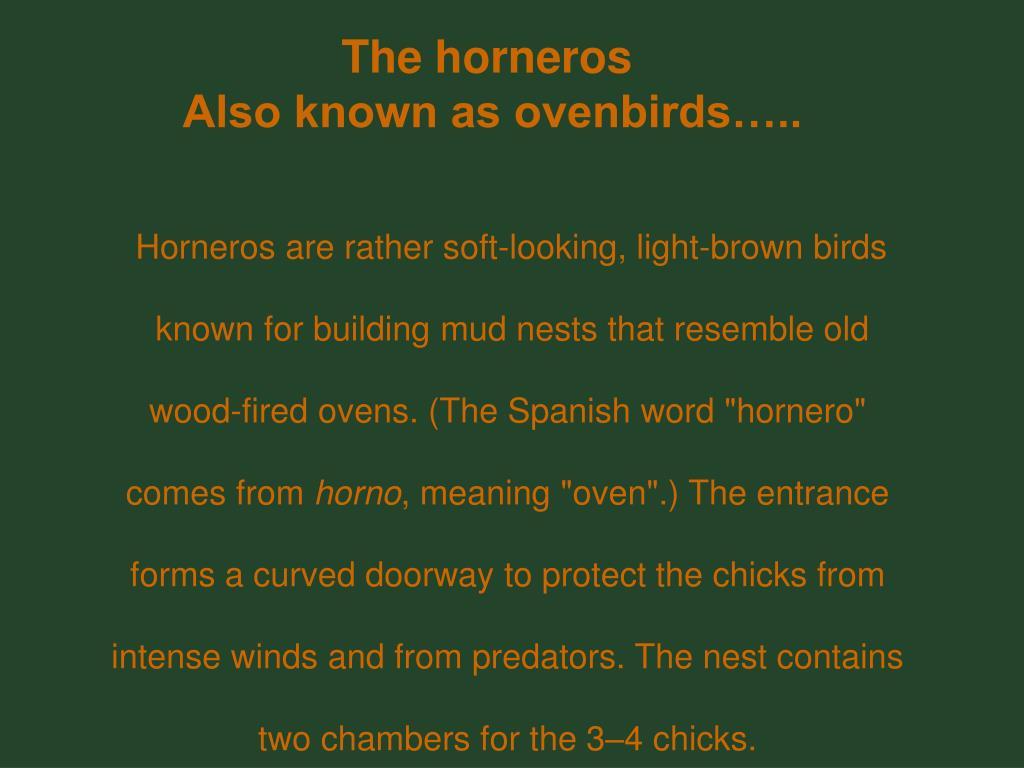 The horneros