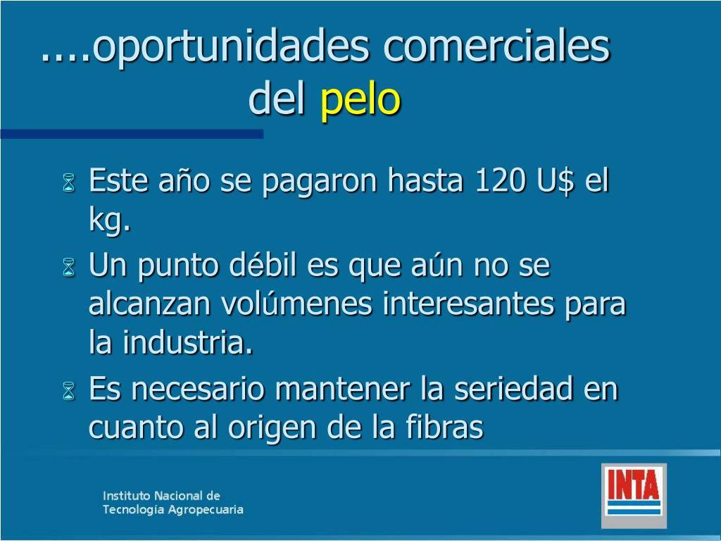 ....oportunidades comerciales del