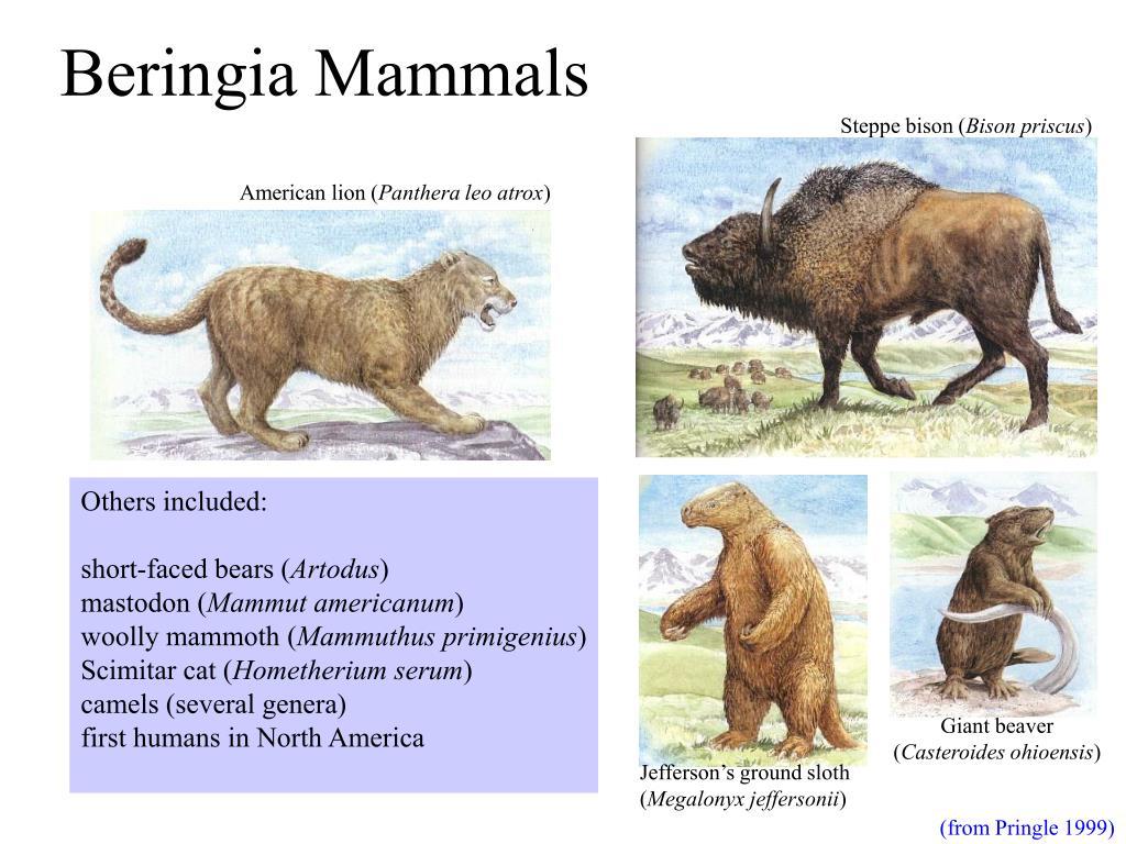 Beringia Mammals