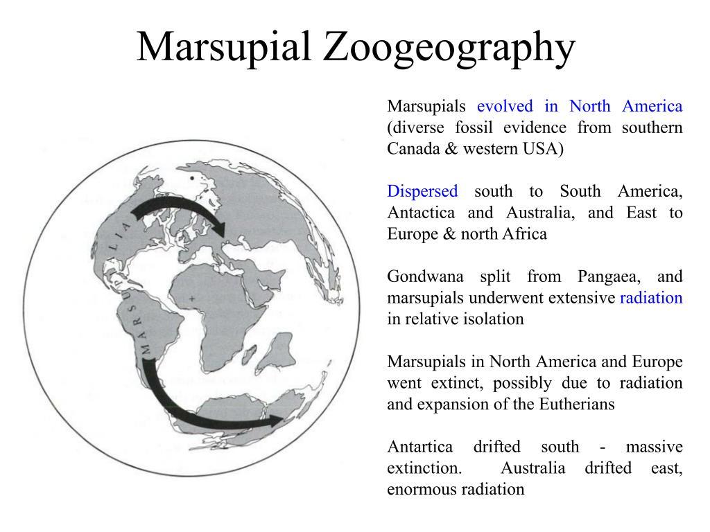 Marsupial Zoogeography