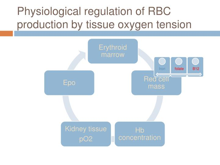 Physiological regulation of RBC production by tissue oxygen tension