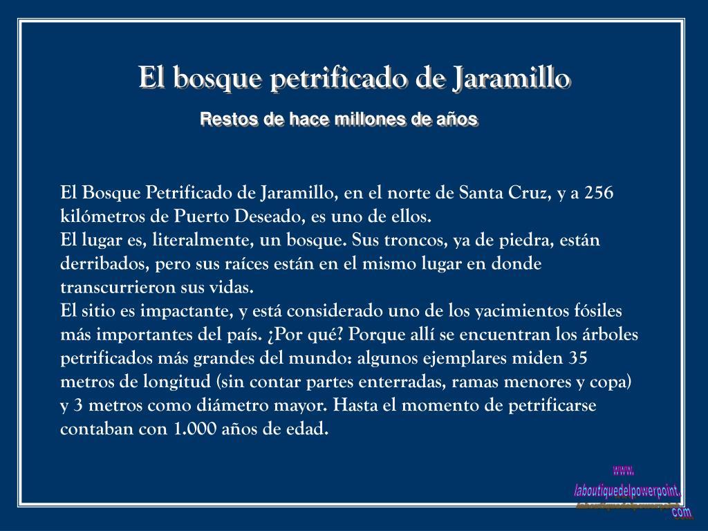 El bosque petrificado de Jaramillo