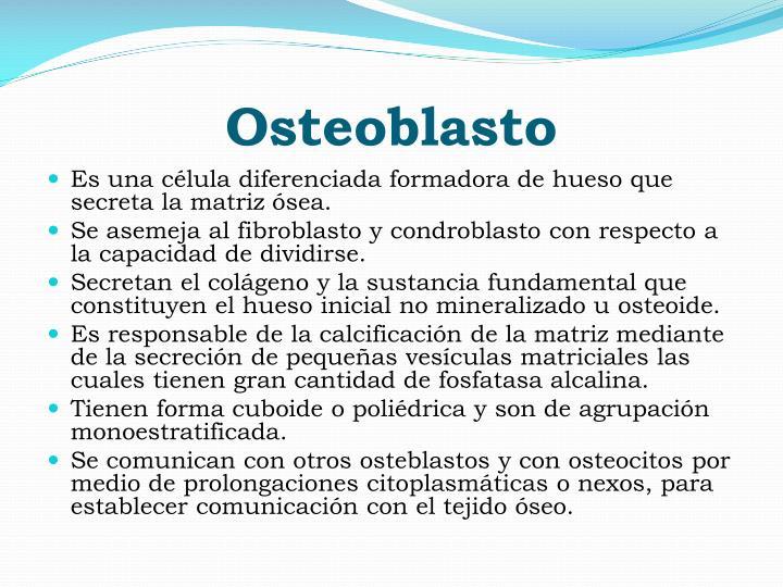 Osteoblasto
